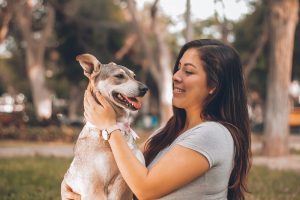 What Are the Main Responsibilities of Pet Ownership